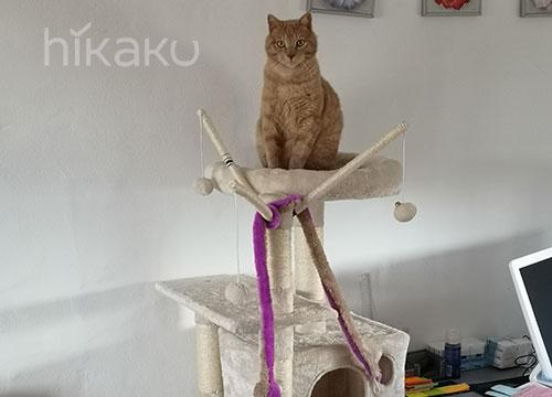 Accesorios y Muebles para Gatos Arbol